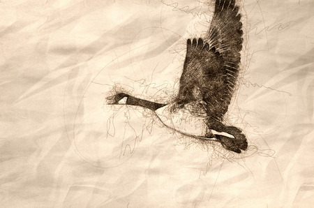 Sketch of a Canada Goose Flying Across the Autumn Woods