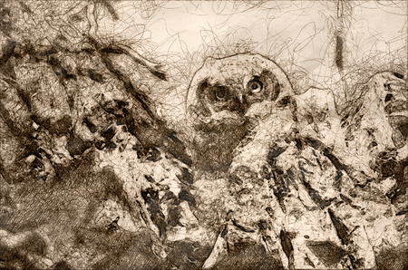 Sketch of a Young Owlet Making Direct Eye Contact From Its Nest Standard-Bild - 120272021