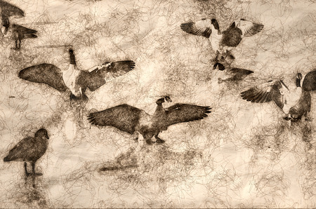 Sketch of Canada Geese Landing on Frozen Lake Imagens