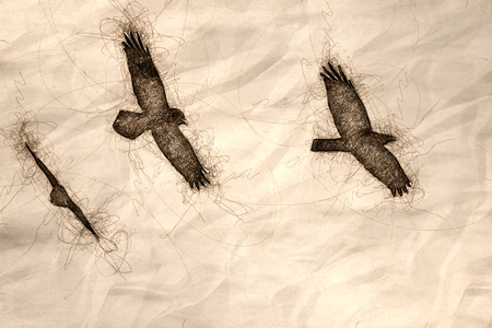 Sketch of Three Common Black Ravens Flying in a Blue Sky