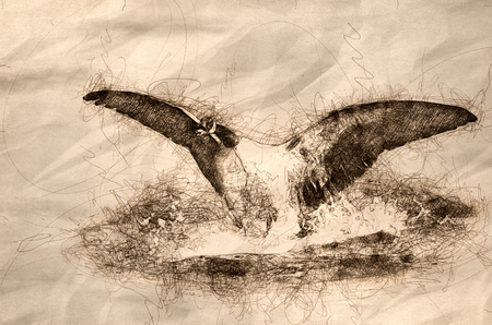 Sketch of a Canada Goose Landing on the River Water Banco de Imagens