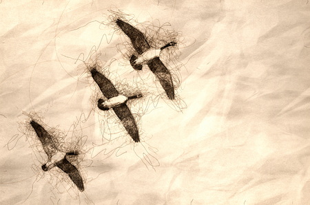 Sketch of Three Canada Geese Flying in a Blue Sky 写真素材