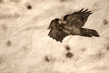 Sketch of a Common Black Raven Flying Over the Canyon Floor