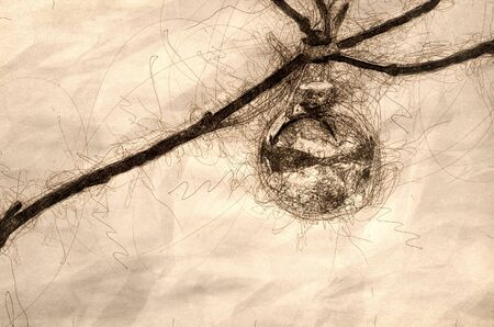 Sketch of a Christmas Ornament Decorating an Outdoor Tree Reflecting Snowy Scene