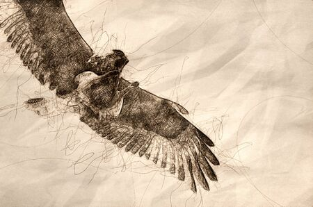 Sketch of a Rough-Legged Hawk on White Background Banco de Imagens