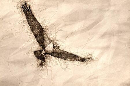 Sketch of an Osprey In Flight Carrying a Fish Reklamní fotografie