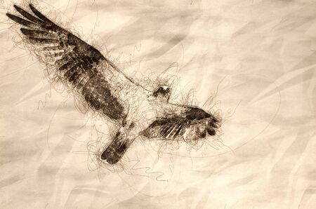 Sketch of an Osprey Making Eye Contact While Flying in Blue Sky Reklamní fotografie