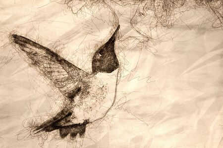 Sketch of Black-Chinned Hummingbird Searching for Nectar Among the White Flowers