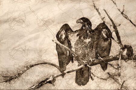 Sketch of a Young Bald Eagle Surveying the Area While Perched High in a Barren Tree Banco de Imagens