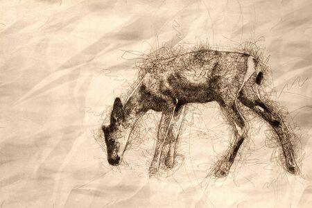 Sketch of a Young Buck Deer Walking Across the Open Field Reklamní fotografie