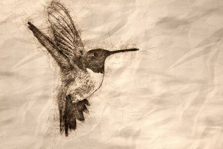 Sketch of Black-Chinned Hummingbird Searching for Nectar in the Garden Stok Fotoğraf