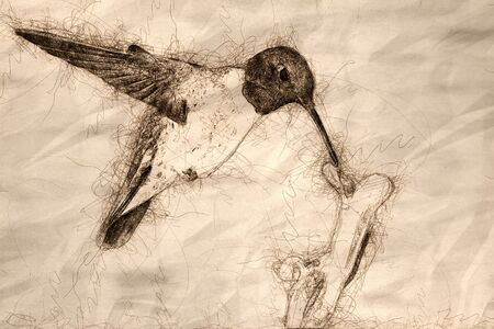 Sketch of Black-Chinned Hummingbird Searching for Nectar Among the Flowers Reklamní fotografie - 127764984