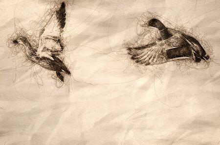 Sketch of Mallard Ducks Taking to Flight from the Rocky River Shore Reklamní fotografie