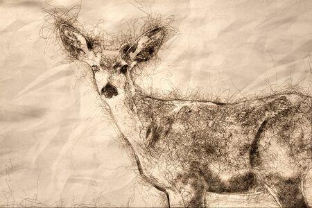 Sketch of a Curious Buck Deer Making Direct Eye Contact Reklamní fotografie - 127764992