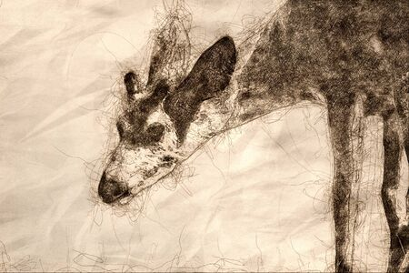 Sketch of a Close Look at the Profile of a Yong Buck Deer 写真素材