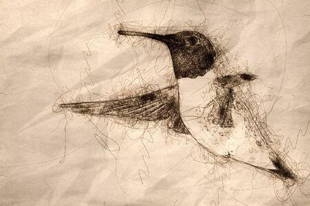 Sketch of Black-Chinned Hummingbird Searching for Nectar in the Flower Garden
