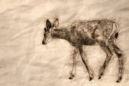 Sketch of a Young Buck Deer Walking Across the Open Field 版權商用圖片