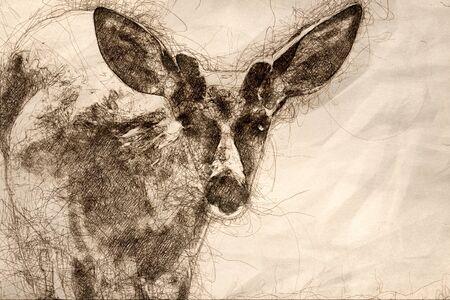 Sketch of Curious Buck Deer Making Direct Eye Contact 写真素材
