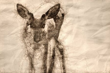 Sketch of a Curious Buck Deer Making Direct Eye Contact