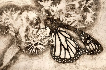 Sketch of Monarch Butterfly Sipping Nectar from the Accommodating Flower Фото со стока