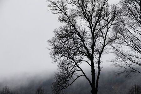 Ominous Silhouetted Tree on a Cold Foggy Morning