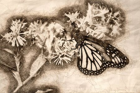 Sketch of a Monarch Butterfly Sipping Nectar from the Accommodating Flower