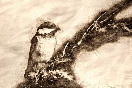 Sketch of a Black-Capped Chickadee Against A Blue Background