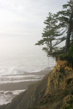 A cliff eroding away under a tree at the oceans edge. photo