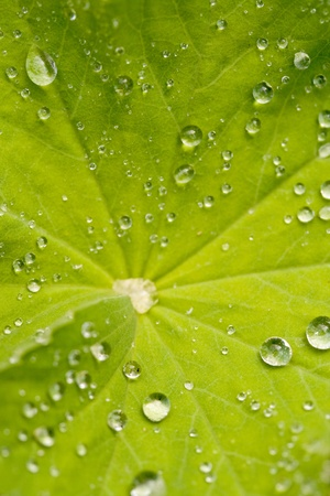 leaf with water beads photo