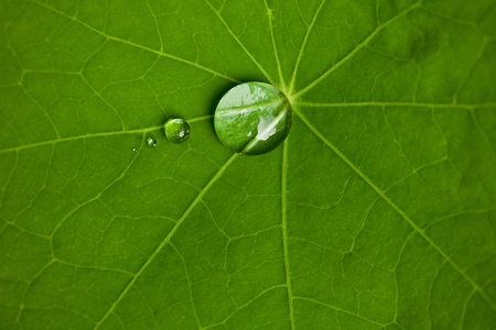 repel: lotus leaf with water drops