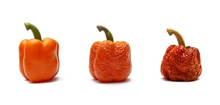 compost: orange peppers in the aging process Stock Photo