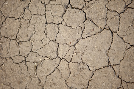 desiccation: parched earth