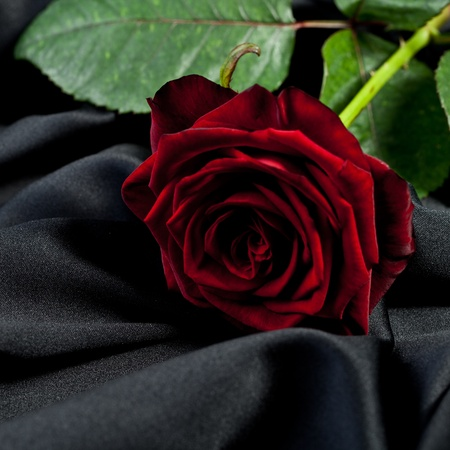 burial: red rose on black silk