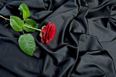 red rose on black silk photo