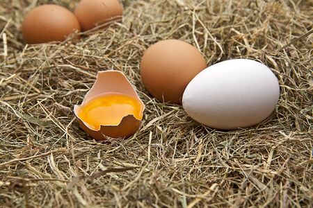 yolk: brown and white eggs on hay