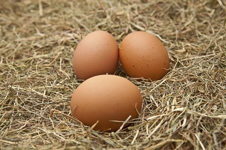 biologically: brown and white eggs on hay