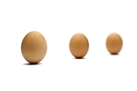 biologically: brown egg on white background