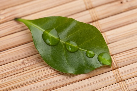 basalt: Leaf with drops on bamboo background