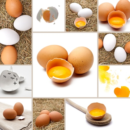 biologically: eggs Collage