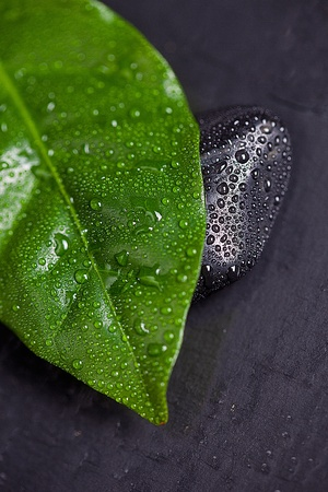 Green leaf and Black Stone with water drops  photo