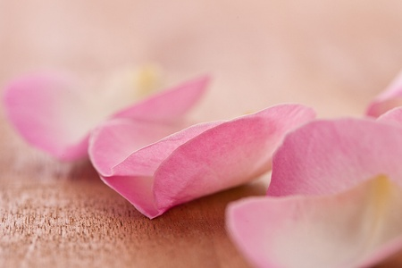 repelling: Rose leafs on wooden background