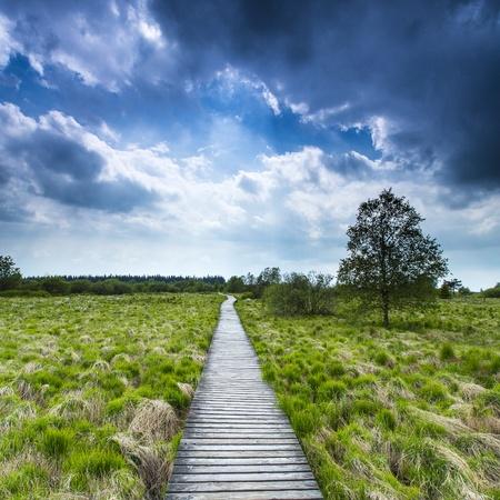 far sighted: high venn boardwalk trail Belgium Eifel nature park moorland clouds tourism