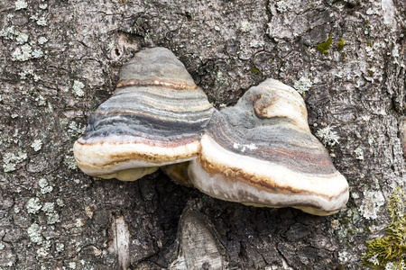 non violence: Natural forest wood tree fungus spores feed wildlife biology seasonal pattern
