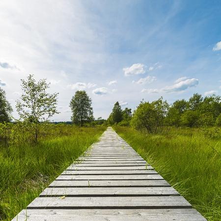 boardwalk trail: high venn boardwalk trail Belgium Eifel nature park moorland clouds tourism