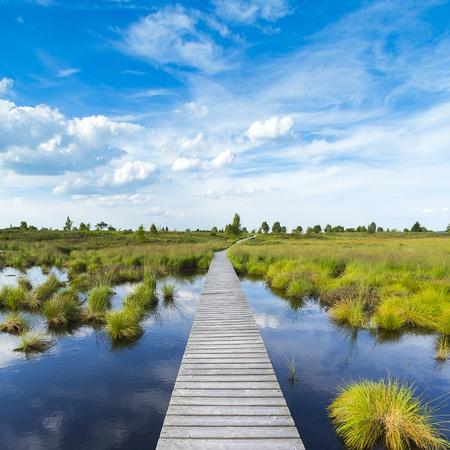 boardwalk trail: high venn boardwalk trail water lake Belgium Eifel nature park moorland clouds tourism