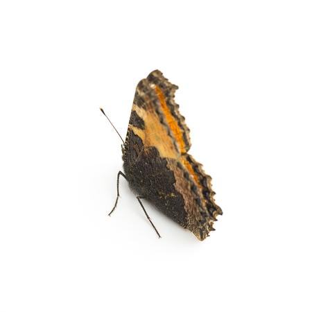 flutter: butterfly Lepidoptera flutter fly Fleckenfalter spring beauty orange bulb garde