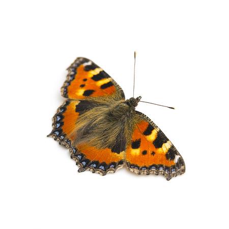 butterfly Lepidoptera flutter fly Fleckenfalter spring beauty orange bulb garde