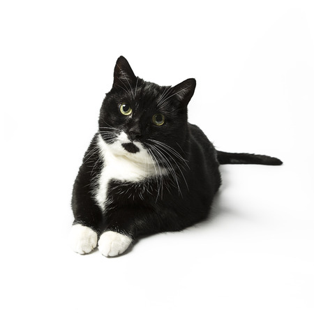 cat isolated black exempted domestic cat pet kitty kitty meow looking whisker faithful Stock Photo - 24971687