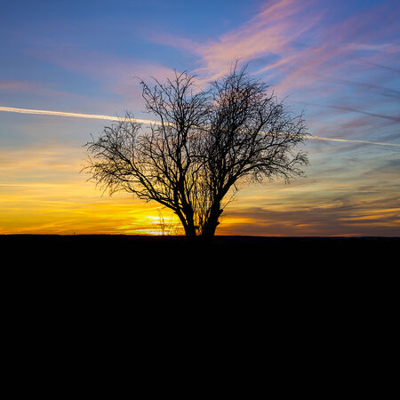 branched: Sunrise silhouette old tree winter sunset nature orange blue hour hot sunlight Stock Photo