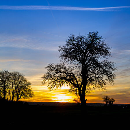 Sunrise silhouette old tree winter sunset nature orange blue hour hot sunlight photo